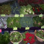 Beaverton Farmers Market: Cool Spring Days = Lots of Greens in the Market