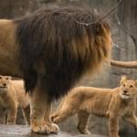 Zoo News is Good News