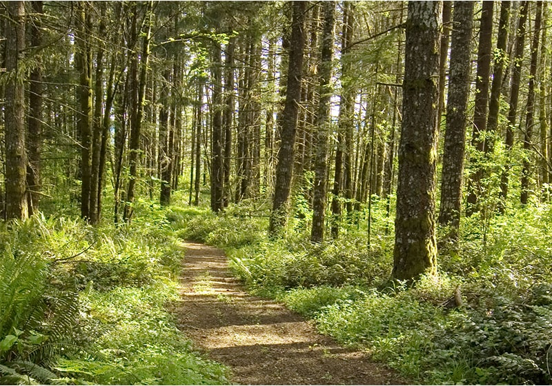 Tualatin Valley Recreation Bucket List: Four great socially distant activities