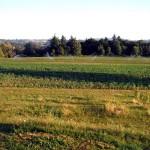 Farmers Market Vendor Spotlight: Winter Farms