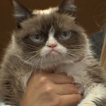 Grumpy Cat Visits Beaverton: A huge hit at Powell's Books