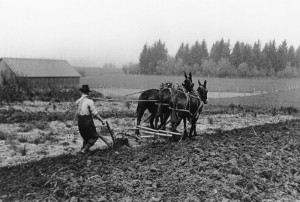 24 Beaverton Farming est. 1920s