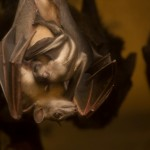 Zoo News is Good News: This Baby Fruit Bat Will Turn Your Frown Upside-Down