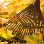 Landscape and Urban Forestry: Leaf Drop-Off