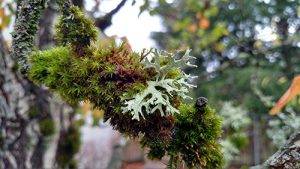 03-moss-and-lichen-together-hd