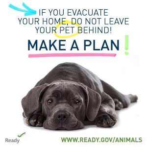 <p>Make a Plan with Pets. Learn more at ready.gov/pets</p> <p>&nbsp;</p>