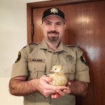 KPTV FOX Channel 12: Deputy Rescues Dove