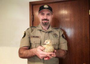 04 Sheriff Deputy Rescues Dove