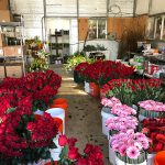 Flower Power: Flower secrets revealed, Valentine's Day hints for next year