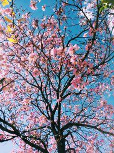 03 spring