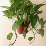 Musings of a Beaverton Teen: The relaxing effect of house plants