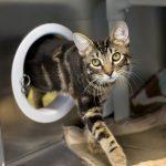 Pets are People Too: New Portals for Cats At the animal shelter