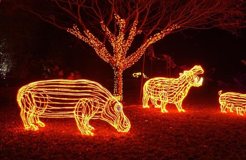 Zoo news is good news! 6 pro tips for a luminous ZooLights experience