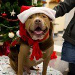 Bonnie Hays Animal Shelter: Holiday Pet Safety Tips