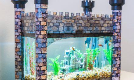 Business Spotlight: Aquarium & Terrarium Decorative Covers, Customize Your 10-Gallon Tank