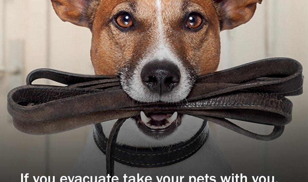 Emergency Preparedness for Pets, Save this packing list