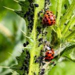 City Landscape and Urban Forestry Department: Pest Insects in the Pacific Northwest