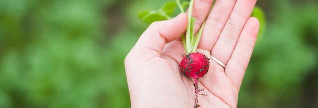 The scoop on buying vegetables: the fresher, the better