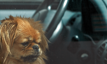 A pet in a hot car!? What should I do?