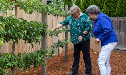 Accessible gardening for seniors: New service from Lifelong Home, LLC