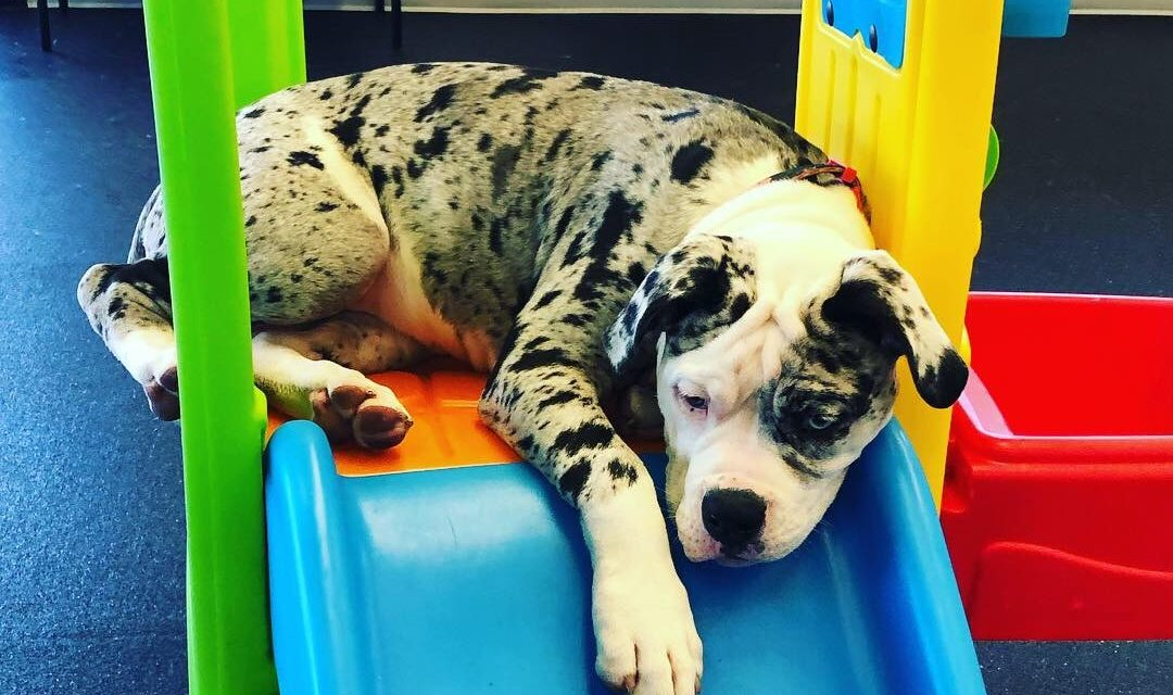 Welcome to Barklandia, Pet Care with a Purpose