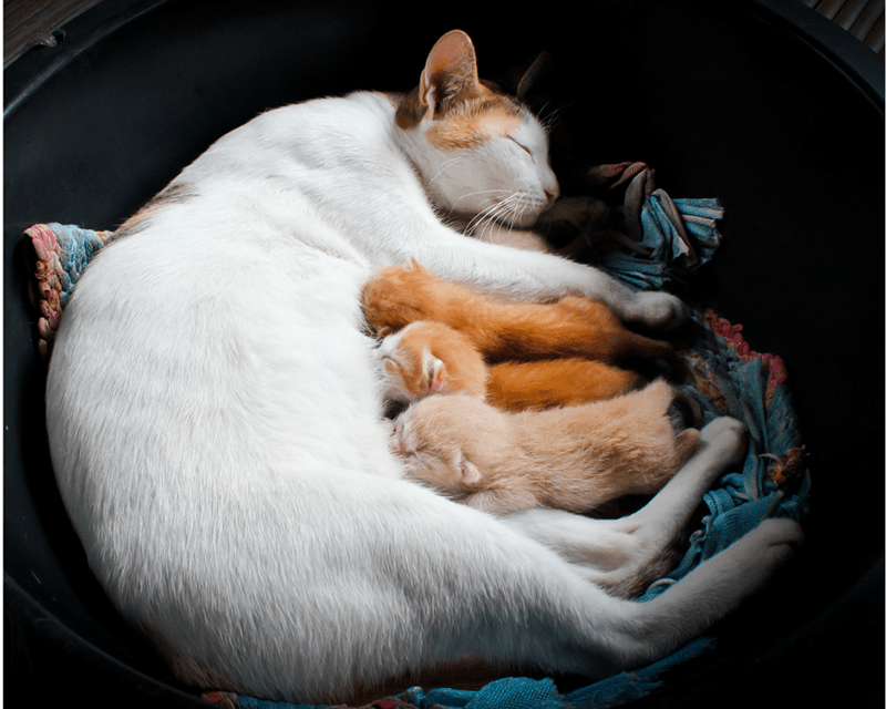 What should I do with stray kittens? Q&A w/Bonnie Hays