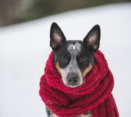 My neighbor leaves his dog out in the cold. Q&A w/Bonnie Hays