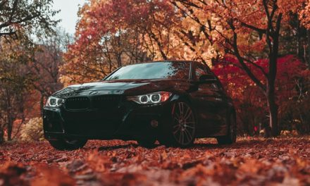 Autumn leaves are both a driving hazard and a danger to your car