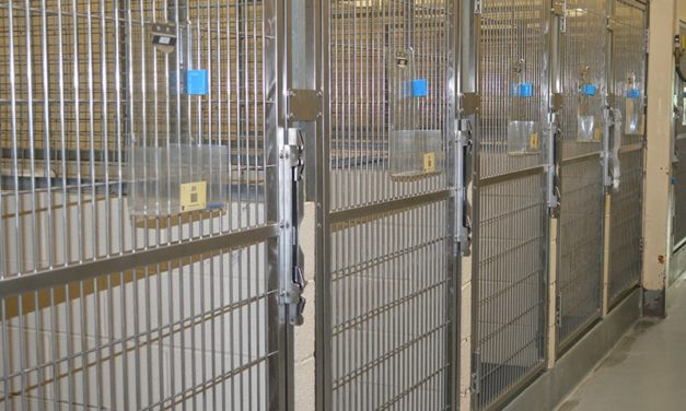 Empty adoption kennels are a sign of success at the shelter