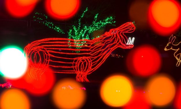 ZooLights is back! Here's how to make the most of it.