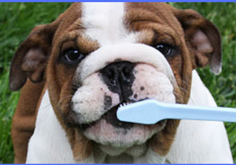 Pets need dental care too. Give your pet a reason to smile