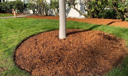 Tips for mulching your garden, Practical and aesthetic
