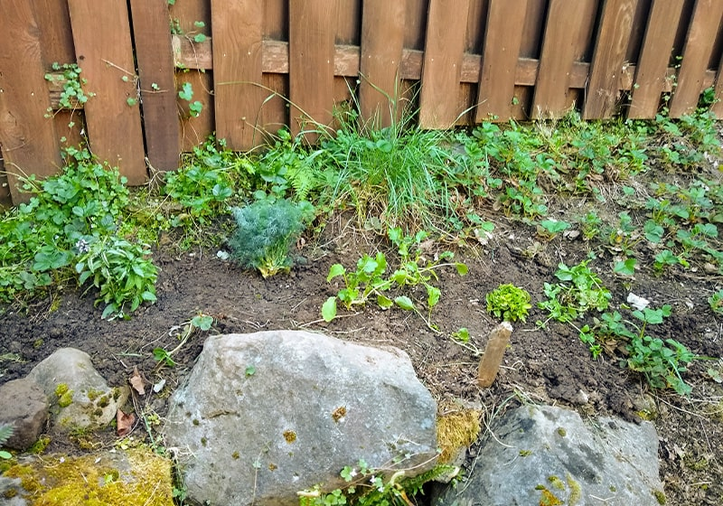 Tales from the Newbie Gardener, Can You Dig It? Yes, I can