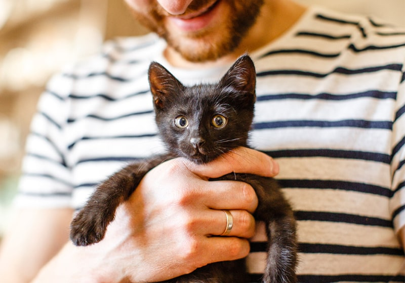 Are you thinking of adopting a pet this summer? Can I donate to the shelter?