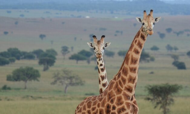 Zoo acts to relieve poaching crisis: A problem heightened by COVID-19