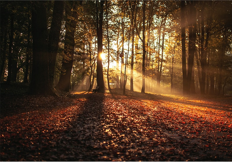 Autumn: a time to breathe in and let go. Let's take a deep breath and be inspired.
