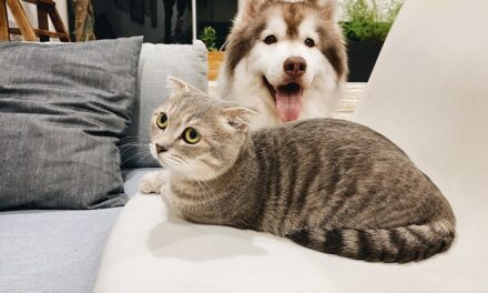 Pets Make Phenomenal Best Friends and soon become part of the family
