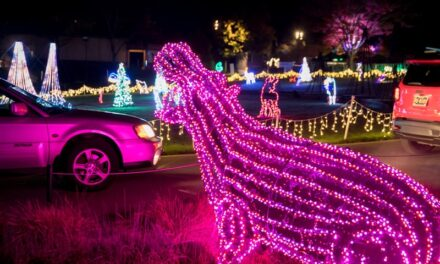 ZooLights returns with new drive- through experience