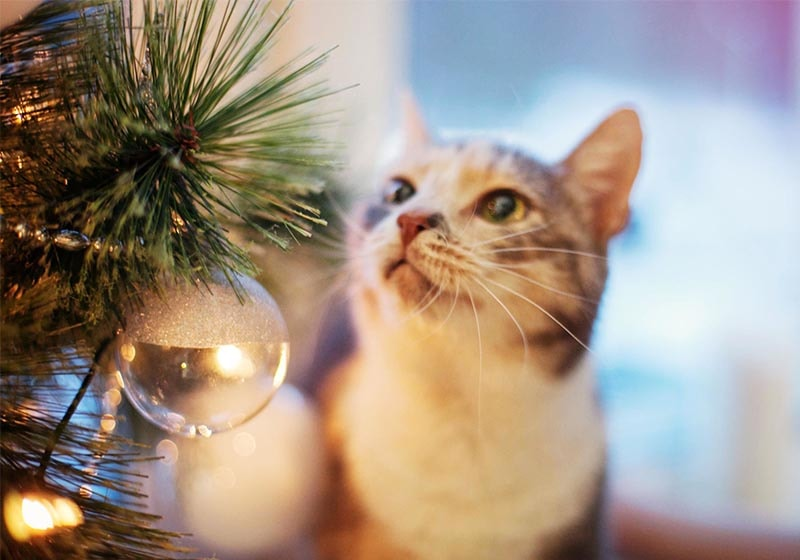 Help your pets enjoy the holidays but watch out for these dangers