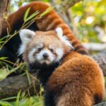 New half-price admission discount now offered at the Oregon Zoo