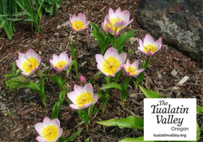 Enchanting Gardens in Tualatin Valley: These hidden gems are the perfect escape