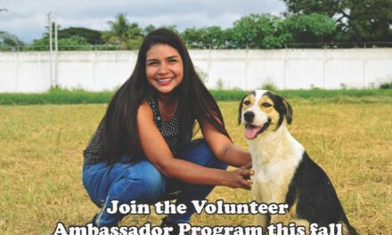 Q&A with the Animal Shelter: How can I volunteer at the shelter?