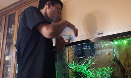 The joys of fish keeping: Create your own aquatic world
