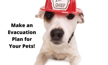 Q&A with the Animal Shelter: Prepping your pets for whatever comes next