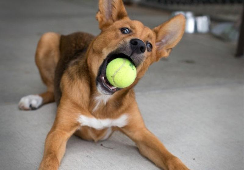 What if my dog bites someone? Q&A with the Animal Shelter