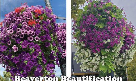 Old Town's hanging baskets… see you again next year!